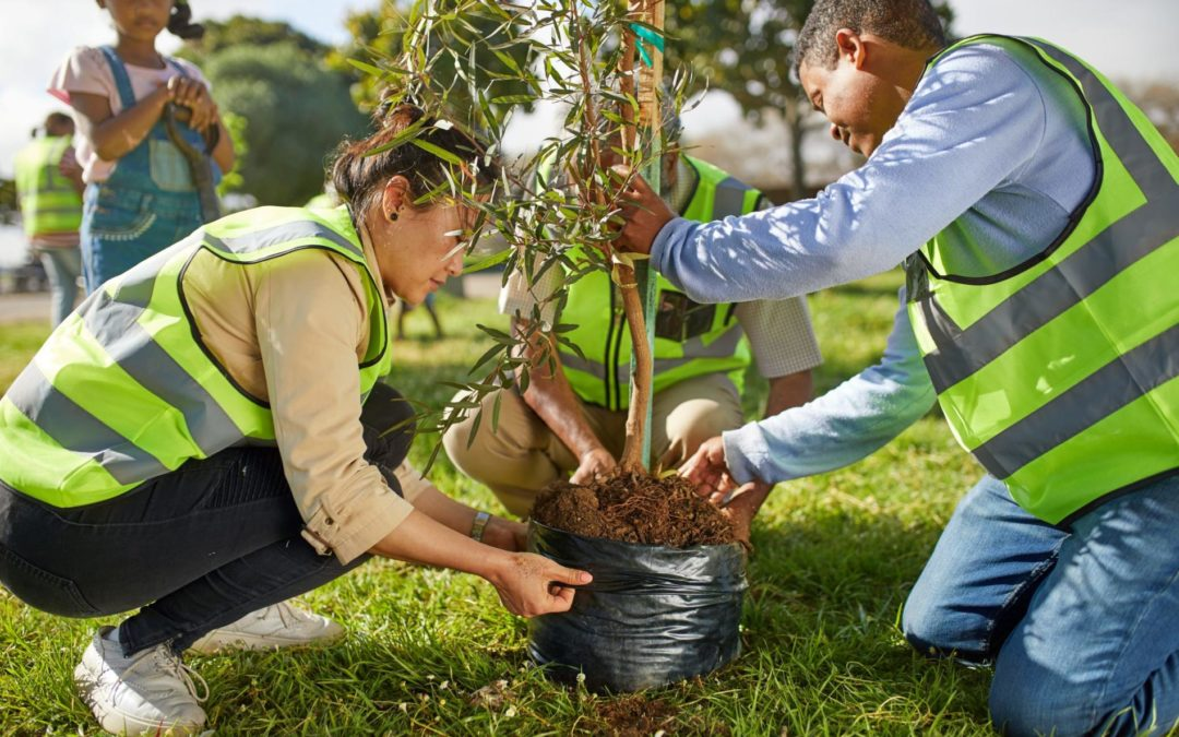 Sync Service-Tree Planting Project