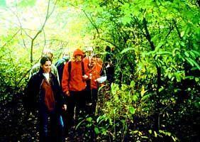 Trail Maintenance – Manderfield Preserve