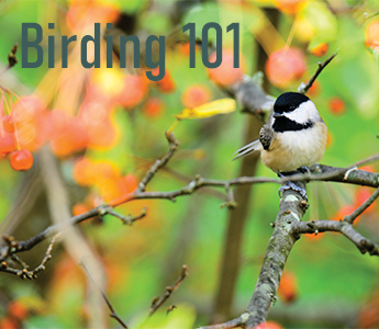 Birding 101 With the Wildlands Conservancy