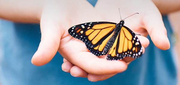 Monarch Watch: Tagging, Pollinator Hike and Seed Bomb Craft